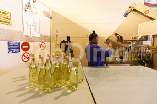 Abfüllen von Sekt (Südafrika, Stellar Organics) - lobOlmo Fair-Trade-Fotoarchiv