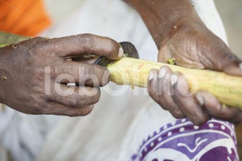 Abschaben der Zimtaußenrinde (Sri Lanka, PODIE) - lobOlmo Fair-Trade-Fotoarchiv