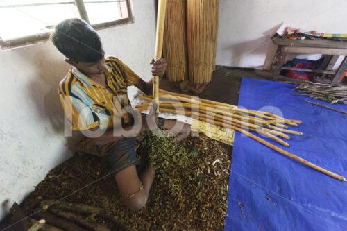 Abschaben der Zimtaußenrinde (Sri Lanka, SOFA/BioFoods) - lobOlmo Fair-Trade-Fotoarchiv