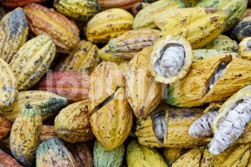 Aufgeschlagene Kakaofrüchte (Bolivien, EL CEIBO) - lobOlmo Fair-Trade-Fotoarchiv