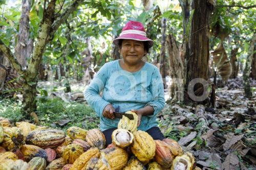 Aufschlagen geernteter Kakaofrüchte (Bolivien, EL CEIBO) - lobOlmo Fair-Trade-Fotoarchiv