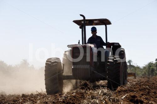 Aussaat von Zuckerrohr (Paraguay, Manduvira) - lobOlmo Fair-Trade-Fotoarchiv