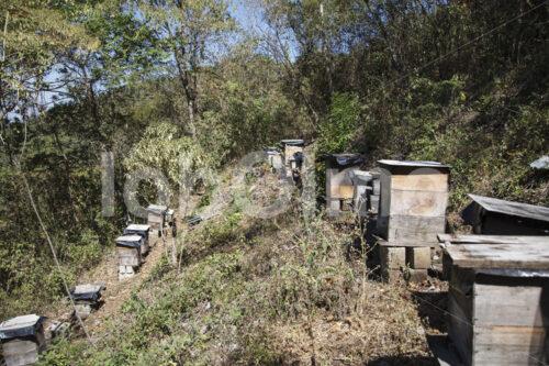 Bienenstöcke (Guatemala, GUAYA'B) - lobOlmo Fair-Trade-Fotoarchiv