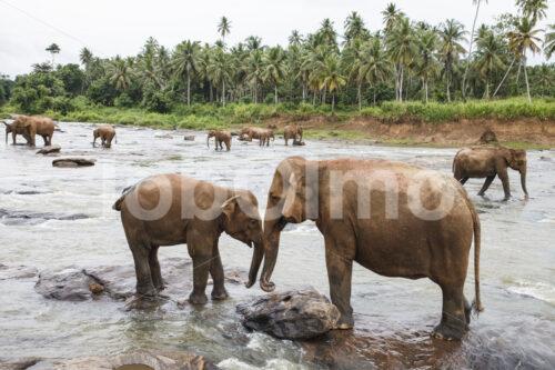 Elefanten (Sri Lanka) - lobOlmo Fair-Trade-Fotoarchiv
