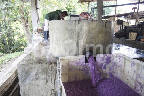 Elefantenkot-Papierpulpe (Sri Lanka, MAXIMUS) - lobOlmo Fair-Trade-Fotoarchiv