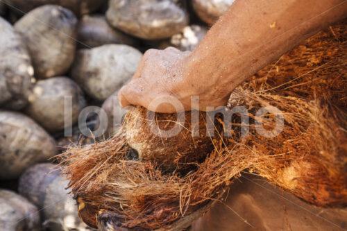 Entfernen der Kokosfaserschicht (Sri Lanka, MOPA/BioFoods) - lobOlmo Fair-Trade-Fotoarchiv