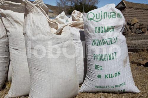 Geerntete Quinoa (Bolivien, ANAPQUI) - lobOlmo Fair-Trade-Fotoarchiv