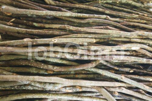 Geerntete Zimttriebe (Sri Lanka, SOFA/BioFoods) - lobOlmo Fair-Trade-Fotoarchiv