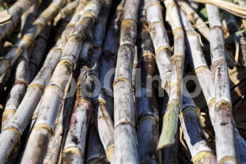 Geerntetes Zuckerrohr (Paraguay, Manduvira) - lobOlmo Fair-Trade-Fotoarchiv