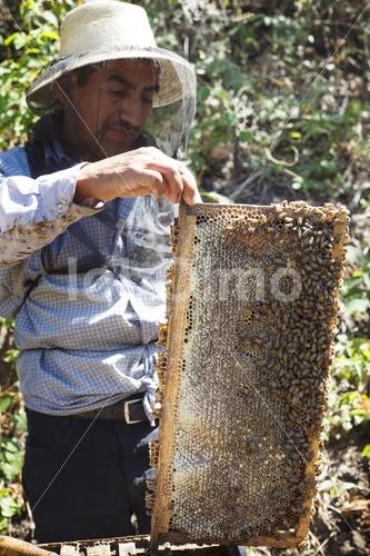 Honigernte (Guatemala, GUAYA'B) - lobOlmo Fair-Trade-Fotoarchiv