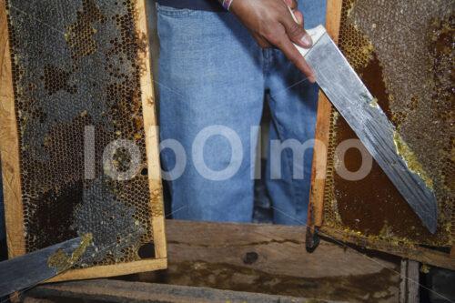 Honiggewinnung (Guatemala, GUAYA'B) - lobOlmo Fair-Trade-Fotoarchiv