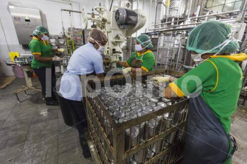Industrielle Kokosmilchherstellung (Sri Lanka, MOPA/BioFoods) - lobOlmo Fair-Trade-Fotoarchiv