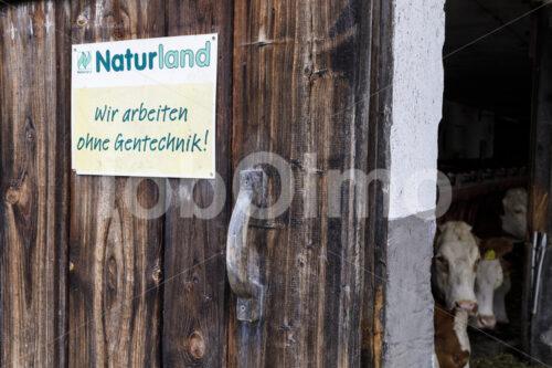 Kuhstall (Deutschland, Molkerei BGD) - lobOlmo Fair-Trade-Fotoarchiv