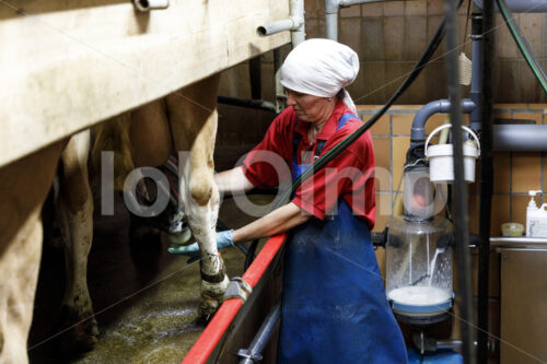 Melken (Deutschland, Molkerei BGD) - lobOlmo Fair-Trade-Fotoarchiv