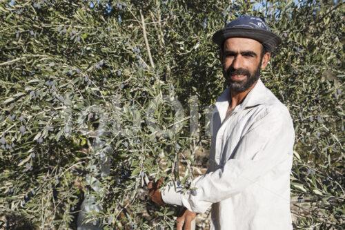 Olivenbauer (Palästina, CANAAN) - lobOlmo Fair-Trade-Fotoarchiv