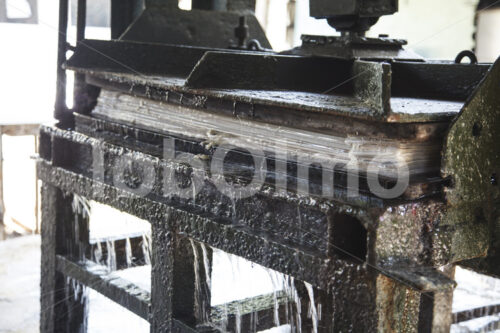 Pressen von Elefantenkot-Papier (Sri Lanka, MAXIMUS) - lobOlmo Fair-Trade-Fotoarchiv