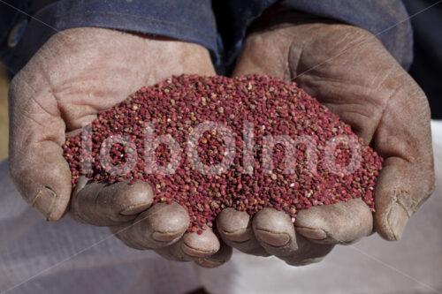 Rote Quinoa (Bolivien, ANAPQUI) - lobOlmo Fair-Trade-Fotoarchiv