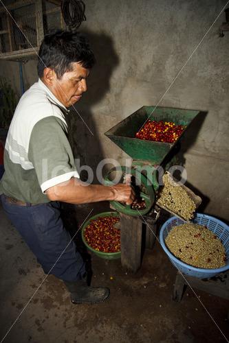 Schälen geernteter Kaffeekirschen (Guatemala, GUAYA'B) - lobOlmo Fair-Trade-Fotoarchiv