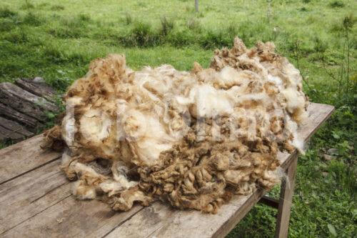 Schafwolle nach der Schur (Chile, Chol-Chol) - lobOlmo Fair-Trade-Fotoarchiv