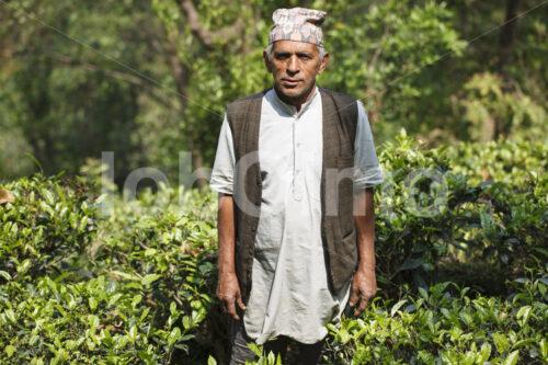 Teebauer (Nepal, KTE) - lobOlmo Fair-Trade-Fotoarchiv