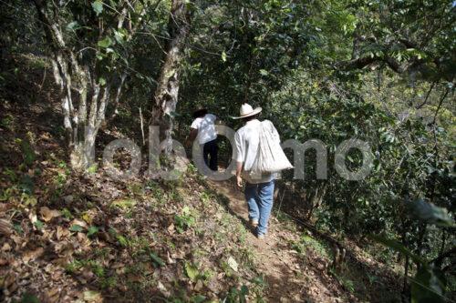 Transport der Kaffeeernte zum Wohnhaus (Mexiko, UCOAAC) - lobOlmo Fair-Trade-Fotoarchiv