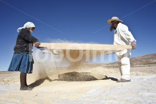 Trennen von Spreu und Quinoakörnern (Bolivien, ANAPQUI) - lobOlmo Fair-Trade-Fotoarchiv