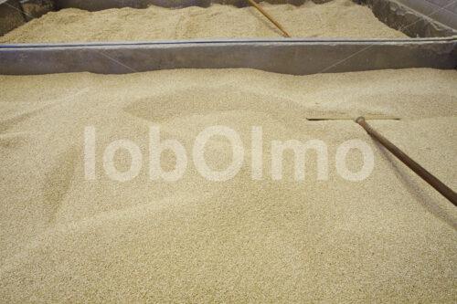 Trocknen der Quinoa (Bolivien, ANAPQUI) - lobOlmo Fair-Trade-Fotoarchiv
