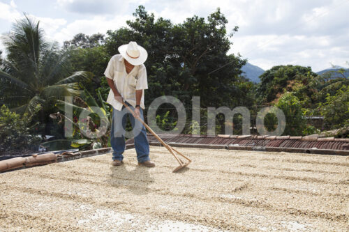 Trocknen fermentierter Kaffeebohnen (Mexiko, UCOAAC) - lobOlmo Fair-Trade-Fotoarchiv
