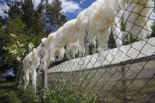 Trocknen von Schafwolle (Chile, Chol-Chol) - lobOlmo Fair-Trade-Fotoarchiv