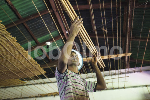 Trocknen von Zimtquills (Sri Lanka, SOFA/BioFoods) - lobOlmo Fair-Trade-Fotoarchiv