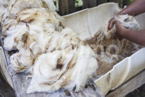 Waschen von Schafwolle (Chile, Chol-Chol) - lobOlmo Fair-Trade-Fotoarchiv