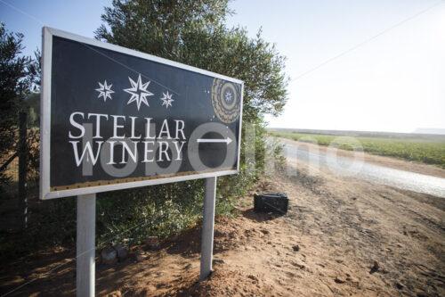Weingut Stellar Organics (Südafrika, Stellar Organics) - lobOlmo Fair-Trade-Fotoarchiv