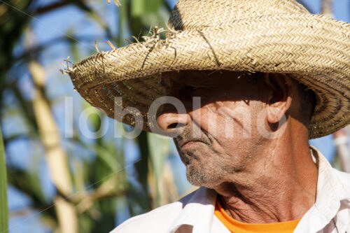 Zuckerrohrerntehelfer (Paraguay, Manduvira) - lobOlmo Fair-Trade-Fotoarchiv